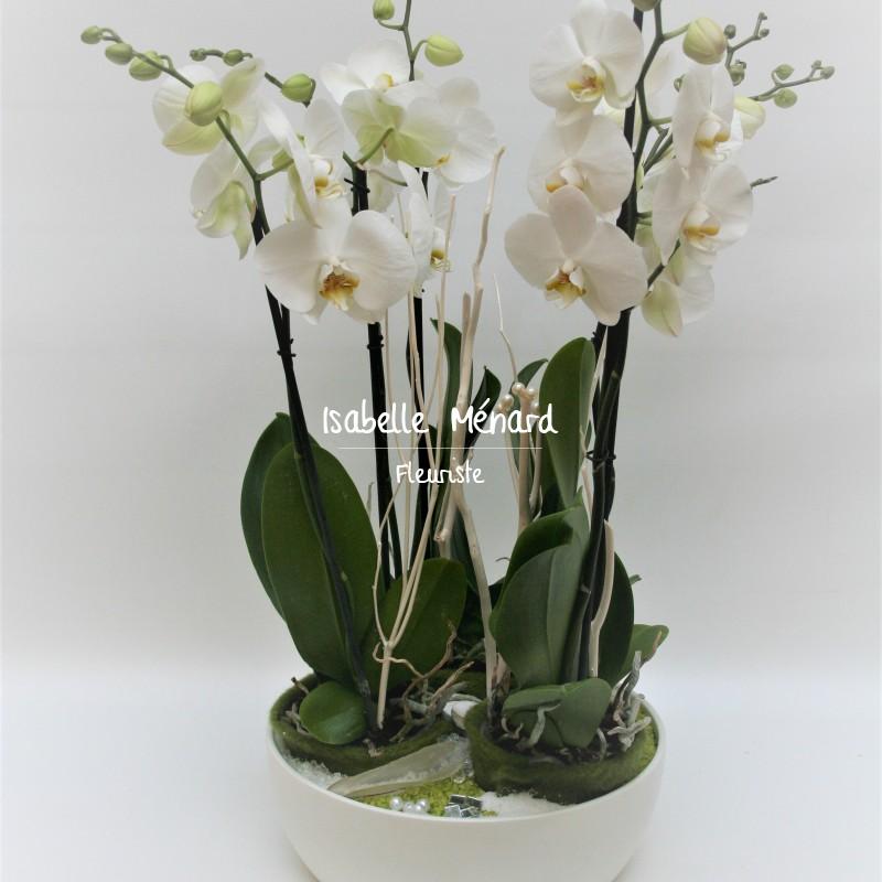 belle coupe de 3 orchidées