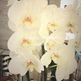 orchidée blanche à grosses...