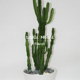 euphorbe - succulente