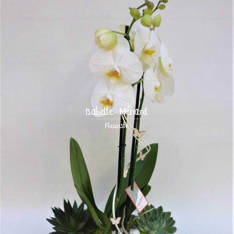 composition d'orchidée et plantes grasses