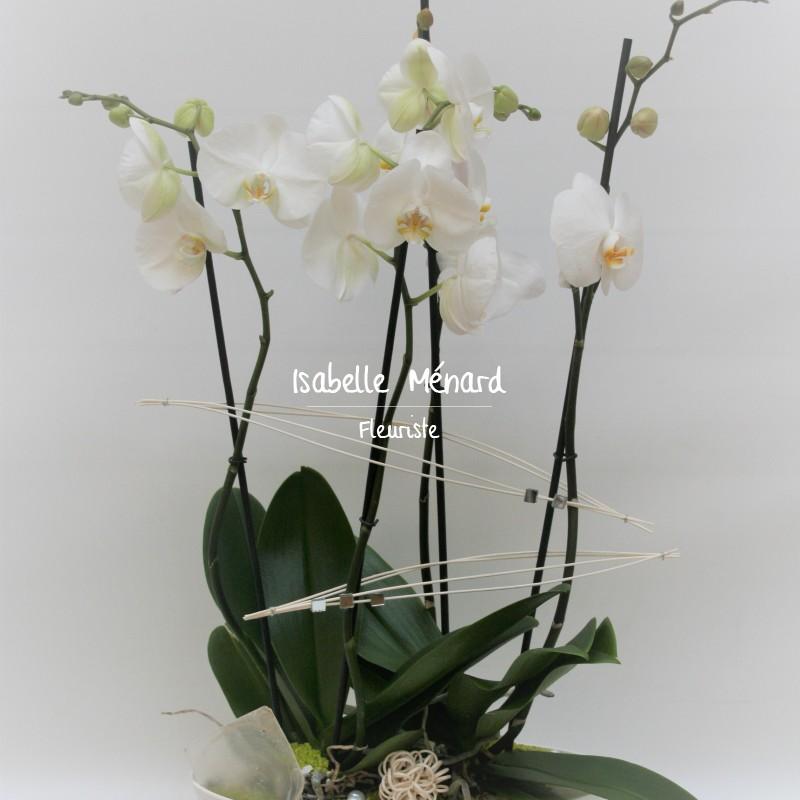 coupe de 2 orchidées