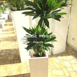 plante verte dans contenant...