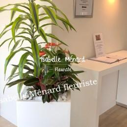 composition de plantes pour...