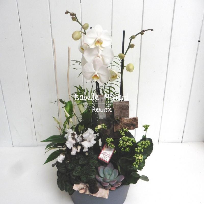 composition de plantes et son orchidée